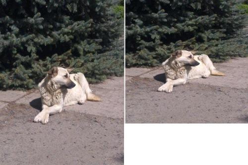 Фотография после изменения размера (с сохранением пропорций и без)